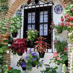 primavera-patios-andaluces-2